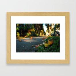 broken trees and fallen leaves, it's fall time. Framed Art Print