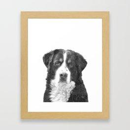 Black and White Bernese Mountain Dog Framed Art Print