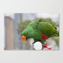 Lovely Parrot Canvas Print