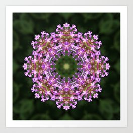 Constellation of Verbena flowers mandala Verbena bonariensis 1829 k2 Art Print