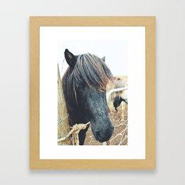 Icelandic Horse - Iceland Framed Art Print