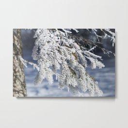 Snowy Spruce Needles 17 Metal Print