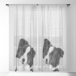 Border Collie - Black & White Sheer Curtain