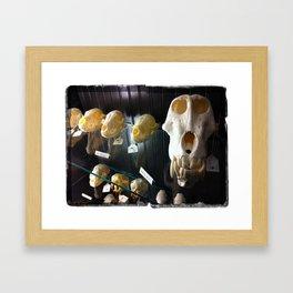 baboon bones Framed Art Print