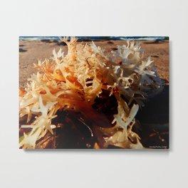 Seaweed on the Beach Metal Print