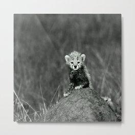 BABY - TIGER - NATURE - LANDSCAPE - ANIMALS Metal Print