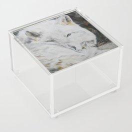 Eye of the Wild by Teresa Thompson Acrylic Box
