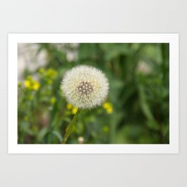 Dandelion in a spider's web Art Print
