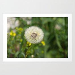 Dandelion in a spider's web Art Print