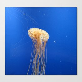Jellyfish 1 Canvas Print