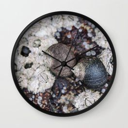 Periwinkles and Barnacles on a rock Wall Clock