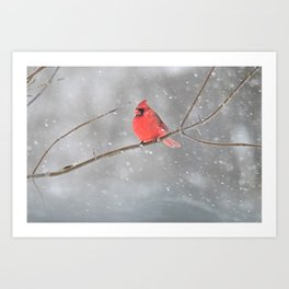 Snowstorm Cardinal Art Print