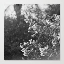 Flowers in Film Canvas Print