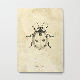 Ladybird pencil drawing Metal Print