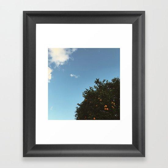 California oranges Framed Art Print
