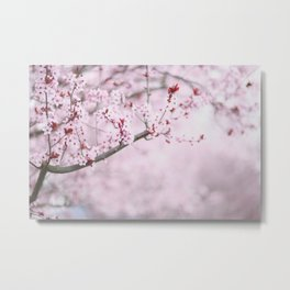 Cherry Blossoms in Grants Pass Metal Print