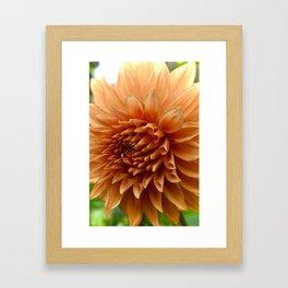 Up Close Orange Flower Framed Art Print