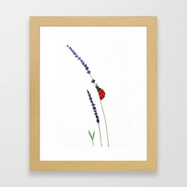 red ladybug and purple lavender Framed Art Print