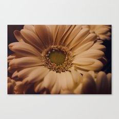 Antique Daisy Canvas Print