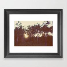 Silent Birch Framed Art Print