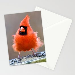 Beacon Floof Stationery Cards
