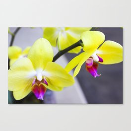 Twin Flowers Canvas Print