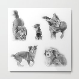 Portraits and actions of a fun dog Metal Print