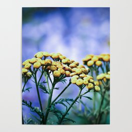 Mountain Flowers Poster