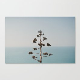 A plant. Canvas Print