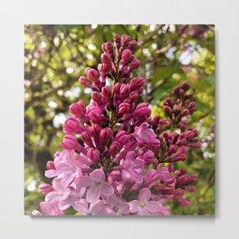 Sweet Lilacs Metal Print