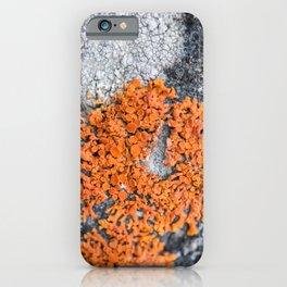 Orange Lichen iPhone Case