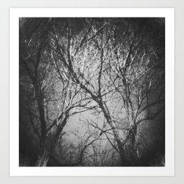 Trees in the dark Art Print