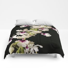 Calanthe rosea Orchid Comforters