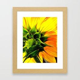 Sunflower's Backside Framed Art Print