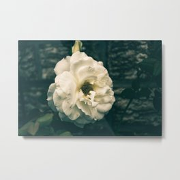Vintage garden flower Metal Print