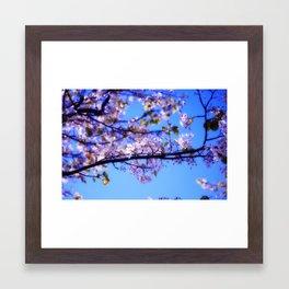 Cherry Blossoms III Framed Art Print