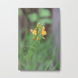 Orange Flower at the Alamo Metal Print