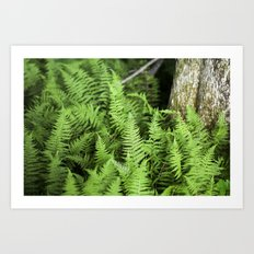 Enchanted Forest of Ferns Art Print