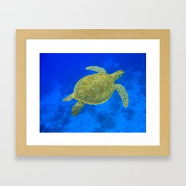 Wildlife: Green Turtle III Framed Art Print