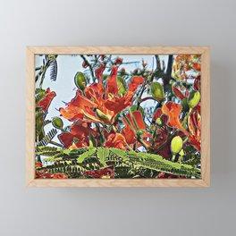 Tropical Royal Poinciana Tree Full Bloom Framed Mini Art Print