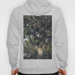 Carob tree Hoody