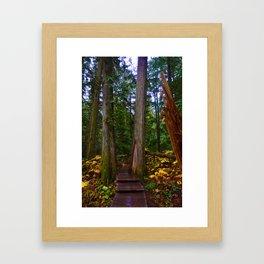 Giant Cedars Boardwalk in Revelstoke BC, Canada Framed Art Print