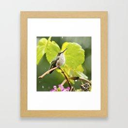 Hummingbird Shower Framed Art Print