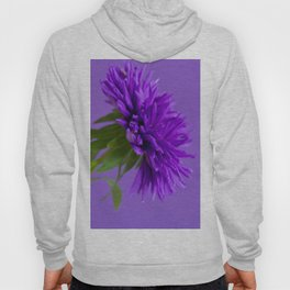 Close-up image of the flower Aster on purple background. Shallow depth of field. Hoody