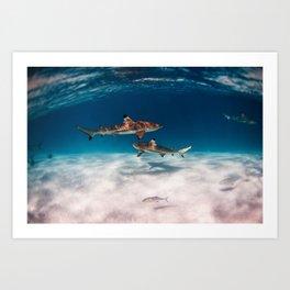 Hello, Sharks! Art Print