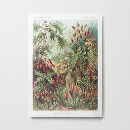 Muscinae-Laubmoose  A Giltsch gem from Kunstformen der Natur (1904) by Ernst Haeckel Metal Print