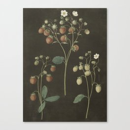 Botanical Wild Strawberry Canvas Print