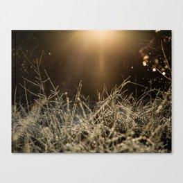 Mid Winter Haze Canvas Print
