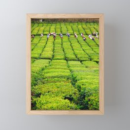 Porto Formoso tea gardens Framed Mini Art Print