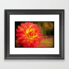 Red Bloom Framed Art Print